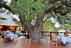 Hamiltons Tented Camp Game Reserve Accommodation - Skukuza, Kruger Park Reminiscent of an Out of Africa experience, a stay at Hamiltons Tented Camp is one that will remain etched in memory. Camping Games, Tent Camping, Campsite, Out Of Africa, Kruger National Park, Game Reserve, African Safari, Africa Travel, Lodges