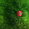 Grass Food by ►CubaGallery