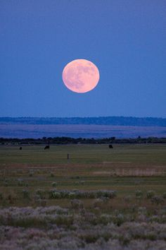 """llbwwb: """"Prarie Moon Rising (by Jared Ropelato) """" Beautiful Moon, Beautiful World, Beautiful Places, Moon Images, Moon Photos, Look At The Moon, Over The Moon, Montevideo, Espanto"""