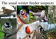Winter Feeder Birds In The Midwest, Via Wild Birds Unlimited Lansing.