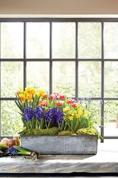 How to bring spring indoors with forced bulbs from your home center.