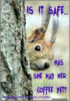There are lots of squirrel like mammals like the ground hog, gopher as well as prairie dog. When it comes to foods, what do squirrel love to eat? Animals And Pets, Baby Animals, Funny Animals, Cute Animals, Wild Animals, Beautiful Creatures, Animals Beautiful, Photo Animaliere, Cute Squirrel