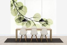 Eucalyptus - Wall Mural & Photo Wallpaper - Photowall