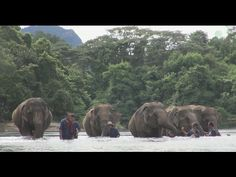 Visit & Volunteer - Elephant Nature Park Booking System