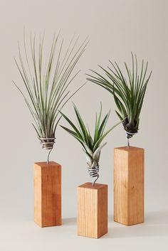 Cool Post: Luftpflanzen von Evrgreen - https://www.lecouture.de/2015/01/luftpflanzen-von-evrgreen/