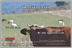 Project Management, Tourism, Trust, Activities, Business, Inspiration, Cousins, Turismo, Biblical Inspiration