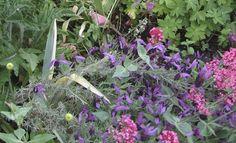 Loos van Vliet - Flower Garden, Haarlem Gardens, Van, Flowers, Plants, Projects, Log Projects, Blue Prints, Outdoor Gardens, Plant