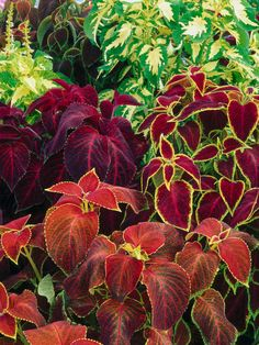 Forget Flowers: Color Your Garden With Foliage! --> http://www.hgtvgardens.com/garden-types-and-styles/create-a-bright-spot-in-your-garden-with-colorful-foliage-flowers?soc=pinterest