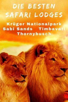 Die besten Safari und Luxus Lodges im Krüger Nationalpark? Der Reise Blog mit Empfehlungen und persönlichen Erfahrungen für Sabi Sands, Timbavati, Thornybush��#Südafrika #Lodges #Krüger #Unterkünfte
