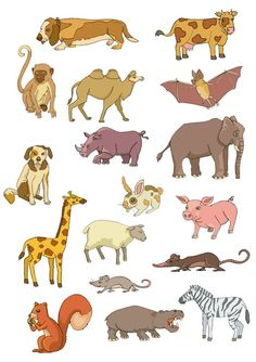 French Names Of Cute Young Animals Language Blog Tutors