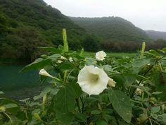 Beautiful Salalh - Oman Salalah, Beautiful Places, Landscapes, Plants, Paisajes, Scenery, Plant, Planets