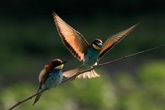 Gyurgyalagok Birds, Animals, Animales, Animaux, Bird, Animal, Animais