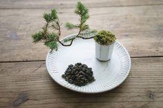 【琅茶】杉森烏龍 / 森林を思わせる冷香・繊細な甘さ - 琅茶 Wolf Tea - 琅琅上口的好茶 | Pinkoi