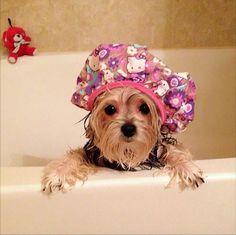 Al bañar a tu perro, ten cuidado de que no le entre agua o jabón en sus oídos. Ya que podría causarle molestias o una infección.  #DoitTip #Mascotas #cuidado