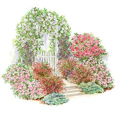 Create a beautiful, romantic scene in your landscape with this garden plan that mixes roses and colorful shrubs.