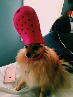 Funny Animal Memes, Cute Funny Animals, Cute Baby Animals, Funny Dogs, Animals And Pets, Funny Memes, Cute Puppies, Cute Dogs, Dogs And Puppies