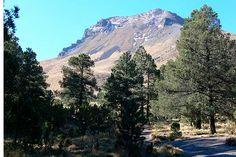 Puebla y Tlaxcala reforestarán La Malinche
