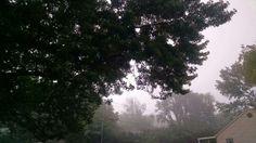 nature / fog