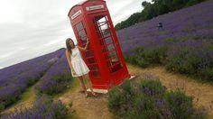 Telephone Booth in Mayfield Lavendar  Field, London