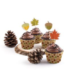 Nuts About Cupcakes 48-Piece Cupcake Decorating Kit
