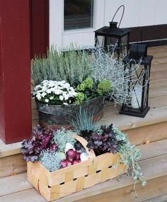 plantes d'automne sur la terrasse - des arrangements de bruyère blanche, chrysanthème blanc, cinéraire maritime