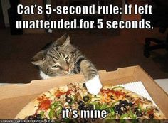 Cat's 5 second rule: If left unattended for 5 seconds, it's mine!