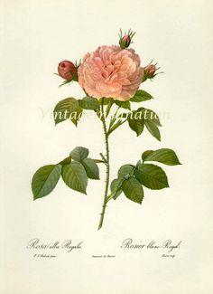 vintage flower illustration - Google Search