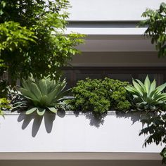 A casual almost resort style garden helps soften the bold, square house. With six substantial balcony planters around the building integrated as part… Pool Landscape Design, Garden Design, Modern Landscaping, Backyard Landscaping, Fun Backyard, Lush, Rainforest Trees, Garden Site, Box Garden