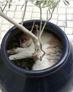 Nobody find me!