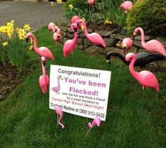 """Flocked: Flamingo flocking refers to a form of lawn greeting. It involves the placement of a """"flock"""" of plastic pink flamingoes in someone's yard."""