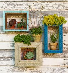 Framed boxes serve as shelving for a selection of potted succulents. Details + more ideas for vertical gardens: http://www.midwestliving.com/garden/container/how-to-create-a-vertical-garden/?page=8