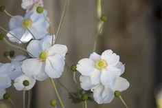 Blumenpracht im Garten: Hotel Maier in Friedrichshafen