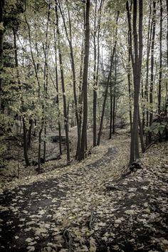 https://flic.kr/p/AzRczG | Autumn in Toronto Parks