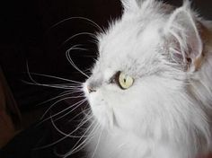 """""""Because his long white whiskers tickled, I began every day laughing."""" --Janet F Faure"""