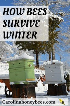 What happens in the bee hive in winter? Successful beekeeping in winter depends on good winterizing of bee hives. Time spent preparing hives for winter will be repaid in healthy spring bees. #beekeeping #bees #diybeekeeping