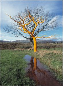 Denbighshire tree PICTURE Alex Ramsay Sculpture Metal, Outdoor Sculpture, Tree Sculpture, Sculptures, Landscape Elements, Landscape Art, Land Art, Andy Goldsworthy Art, Art Environnemental