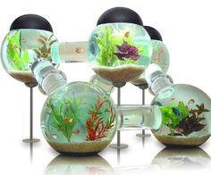 Give your home some real character and show off your fish with the Labyrinth Aquarium. This Labyrinth Aquarium is designed for tropical fish and includes lights, filters, air pumps, cleaning supplies, and makes a cool gift idea for any home.