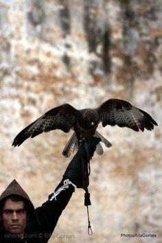 Outros/A falcoaria é a arte de caçar .......