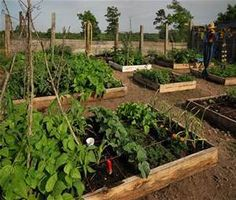 gardening with eo's (MEB blog post)