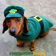 st patrick's day dogs pictures | St Patricks Day Leprechaun Costume for Dogs>>>HA!!!