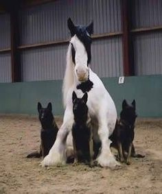 horse with its own body guards. ~ German Shepherds & Gypsy Varner