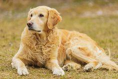 Teil 2 unseres Fotoshootings mit den Hunden des Hotels Grimming