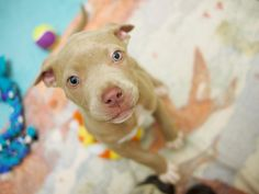 sparkles   D A P S Shelter Dogs, Animal Shelter, Animal Protection, Dog Pictures, Sparkles, Pitbulls, Animals, Animal Shelters, Animales