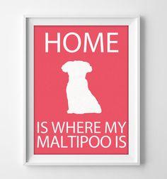 8x10 Maltipoo Wall Art Illustrated Dog Art Maltipoo by pigknit, $8.00