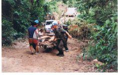 Une charrette de bûcherons bloquée sur la route du Bokor, il a fallu que nous les aidions.