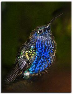 """Baby Hummingbird"" So Pretty!"