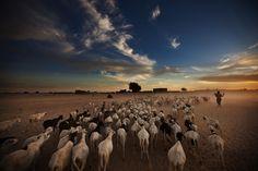 Aux alentours de Tombouctou, Mali#L'un des endroits mythiques de la planète qui a fait fantasmer bien des routards. Cette ville, 36 000 habitants, « cité des 333 Saints » inscrite au Patrimoine mondial de l'Unesco, a été désignée « capitale de la culture islamique » pour l'Afrique en 2006.#http://urlz.fr/3qfL#pulitzercenter.org