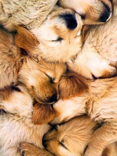 A snuggle of puppies! I wanna be right in the middle of this!!!