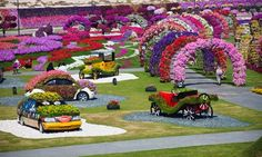 Dubai Miracle Garden in full flower