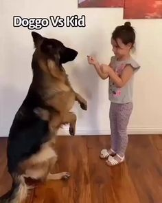 Doggo closes the door after the kid.  Picture what your life with your dog could be like just days from now? Whatever bad behavior your dog was doing before…like chewing or barking way too much, or being aggressive with other animals is gone…or severely diminished and fading away.?They are finally listening you.? click to train your dog to unlock hidden intelegence  #dogtrainingadvice #dogbehaviour #puppytraining #puppytrain #puppytrainingclass #puppytrainer#dogfunny#affiliate Puppy Training Classes, Dog Training Videos, Best Dog Training, Brain Training, Dachshund Puppies, Cute Dogs And Puppies, Malinois Puppies, Puppies Puppies, Scary Dogs